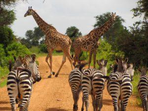 À l'assaut de la Tanzanie et de ses parcs propices au safari